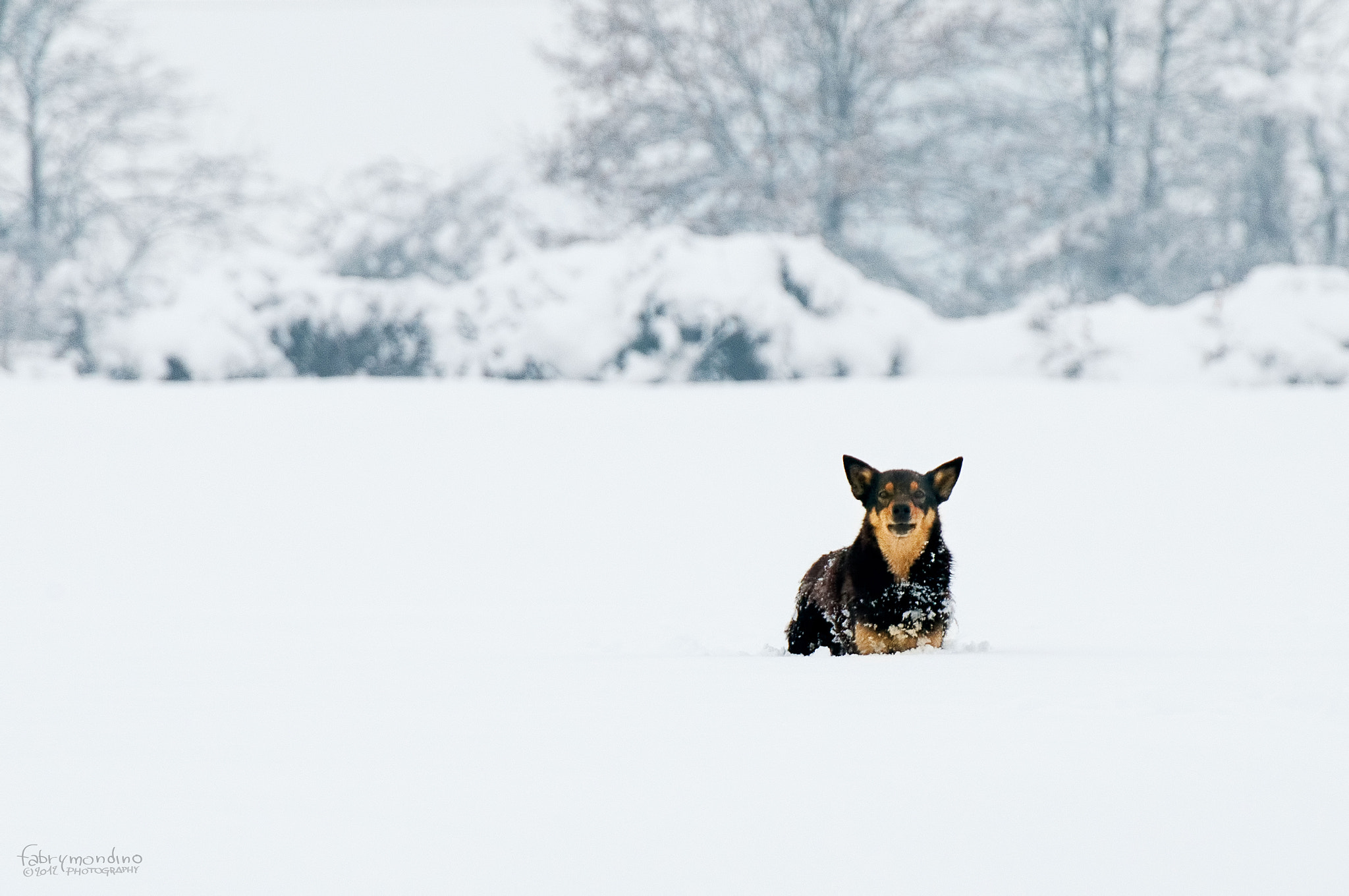 Photograph Dog in the snow by Fabrizio Michele Mondino on 500px