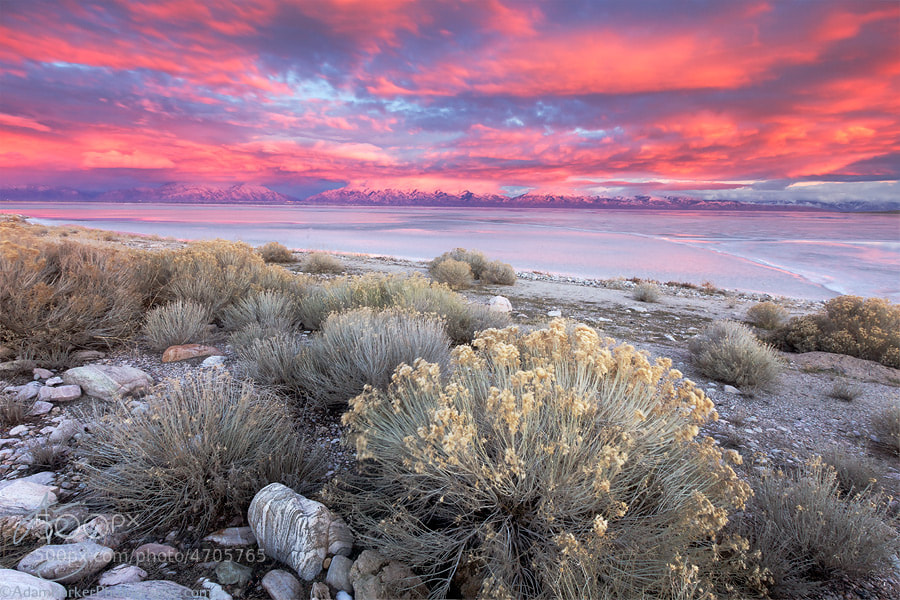 Photograph Antelope Island Sunset by Adam Barker/AdamBarkerPhotography.com on 500px