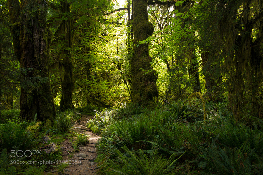 From a 7 mile hike through a temperate rainforest.