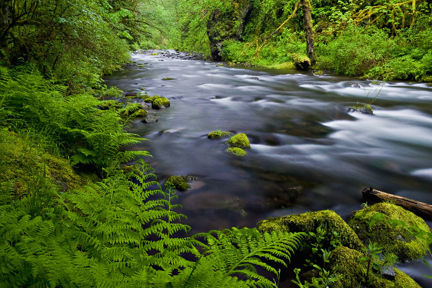 Photograph Tanner Creek by Ned Fenimore on 500px