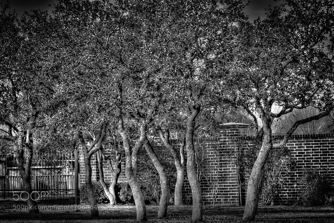 Photograph Dancing Trees by Chester Johnson on 500px