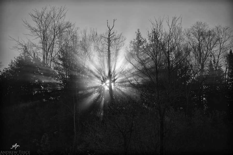 Photograph shine through by Andrew Teece on 500px
