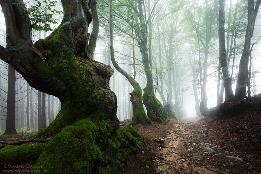 Photograph I met an Ent by Maxime Courty on 500px