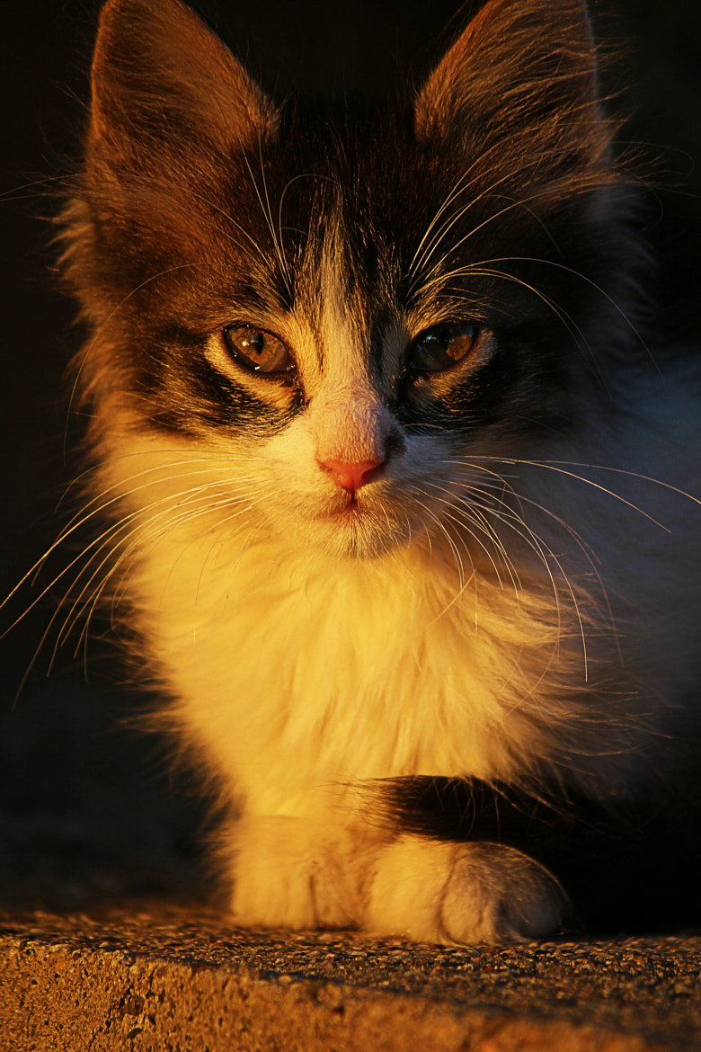 Photograph small cat by Igor Arsovic on 500px