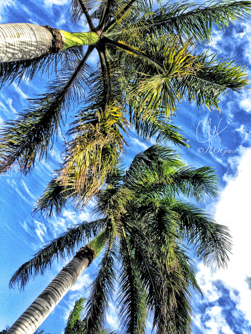 Photograph Palms by Janis Grace on 500px