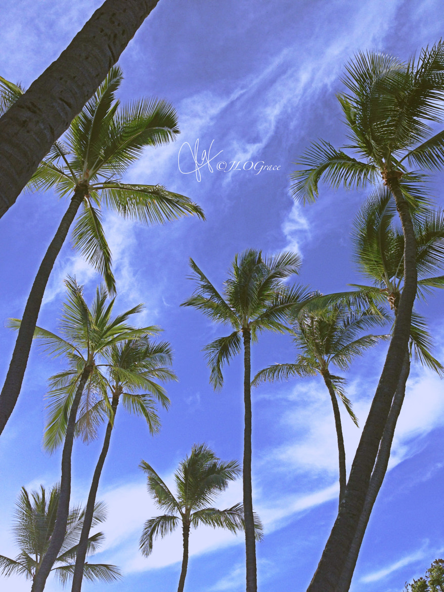 Photograph Palms in the Sky by Janis Grace on 500px
