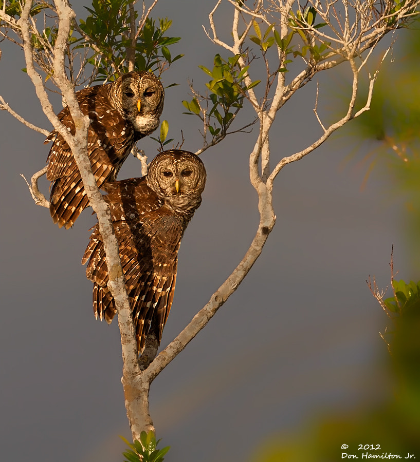 Photograph Mr-&-Mrs.Barred by Don  Hamilton Jr. on 500px