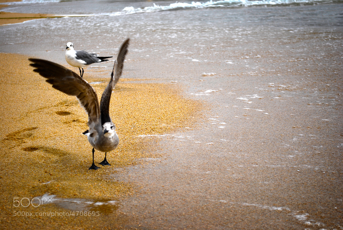 Photograph wings by Damian Lestrade on 500px