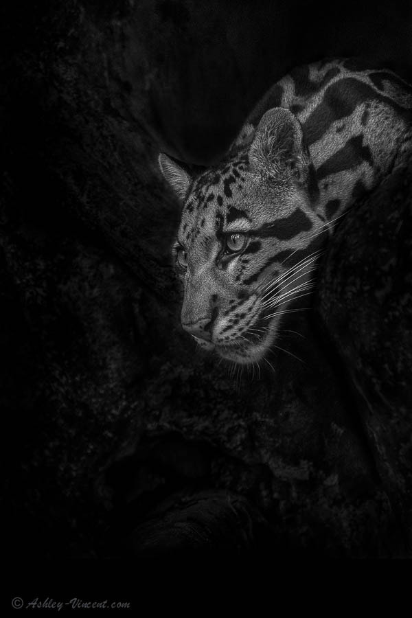 Photograph The Cave Dweller by Ashley Vincent on 500px