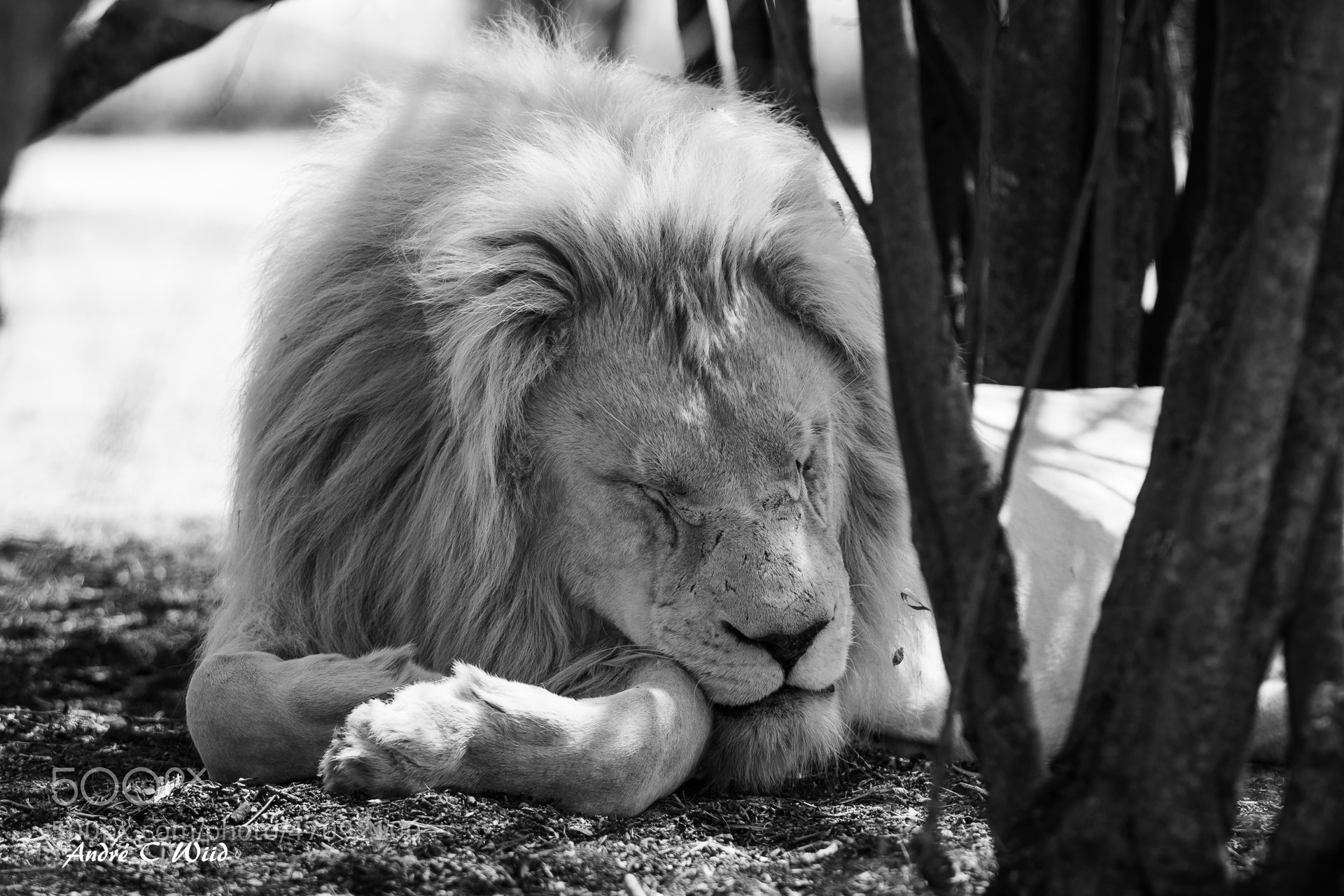 Photograph Life of a king by Andre Wiid on 500px