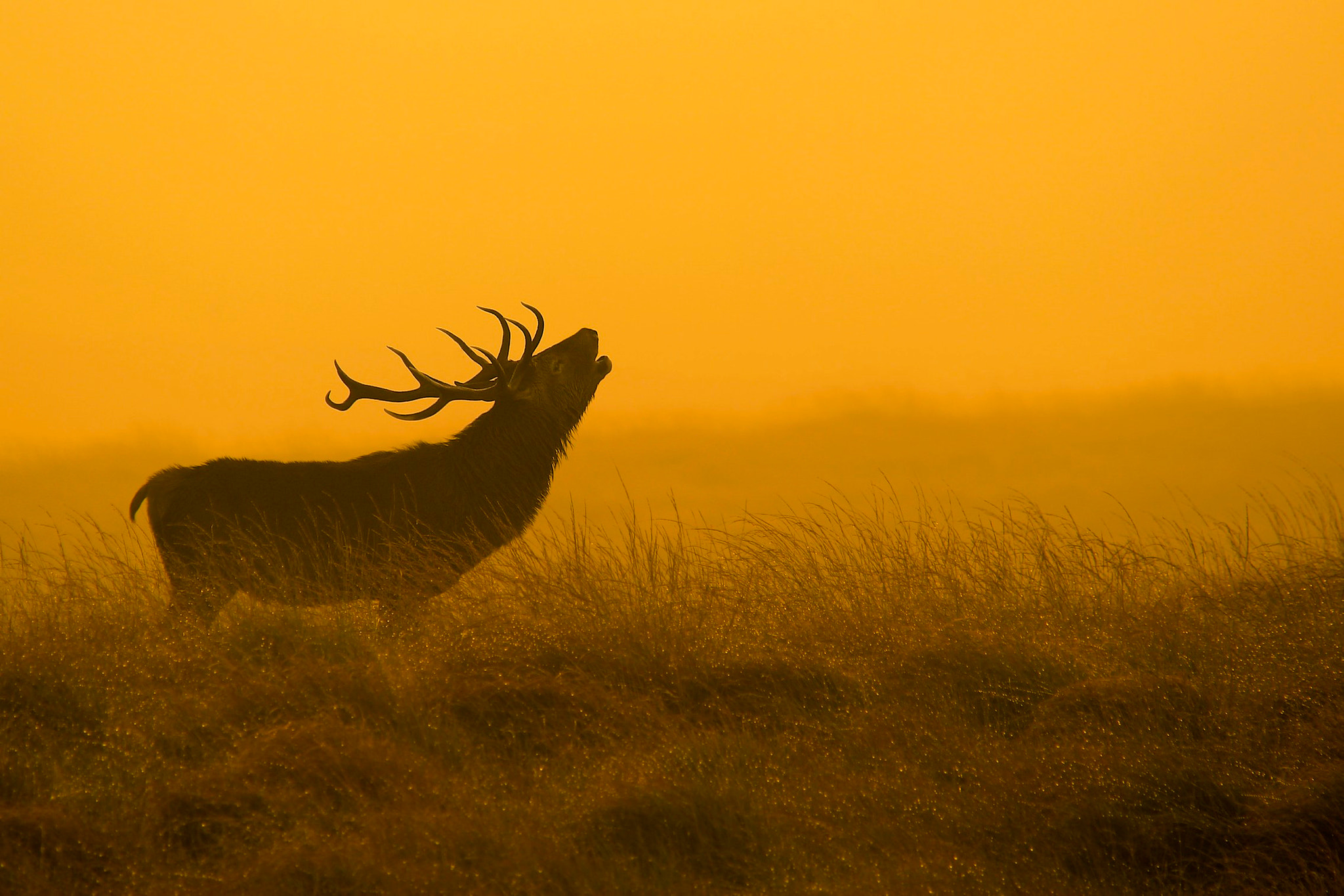 Photograph Red Deer Stag by james morris on 500px