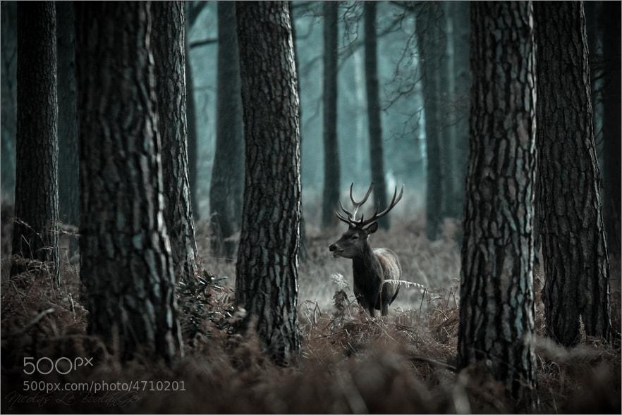 Nicolas Le Boulanger    photography   photography dailyshit       ShockBlast