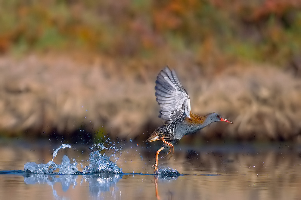 Photograph Jumping on the water II by Leonardo Fava on 500px