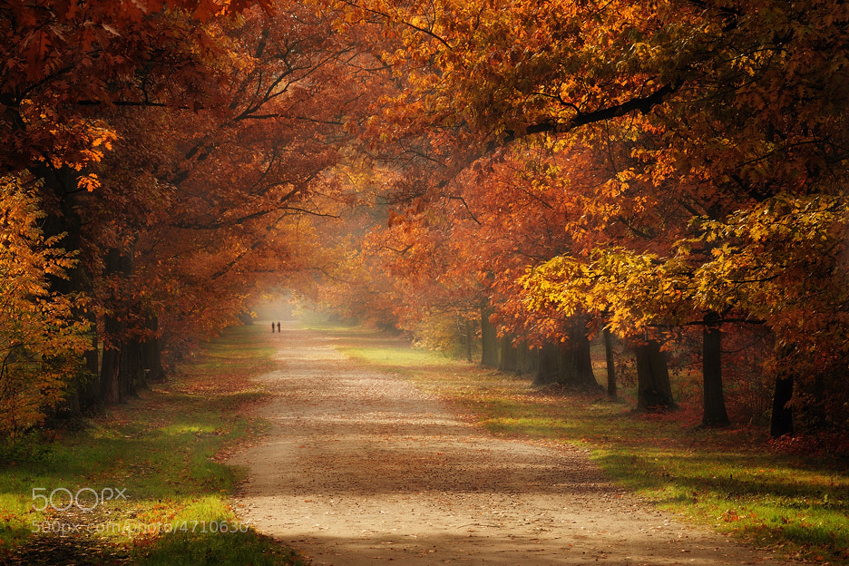 Photograph Autumn... by Pawel Kucharski on 500px
