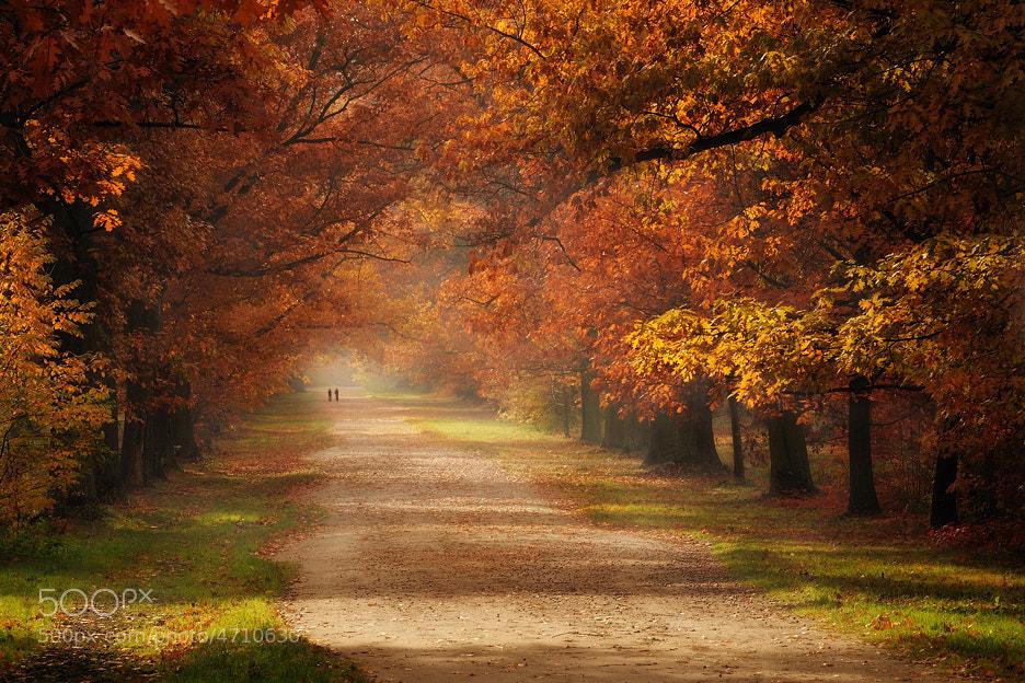 Photograph Autumn... by Pawel Kucharski on 500px