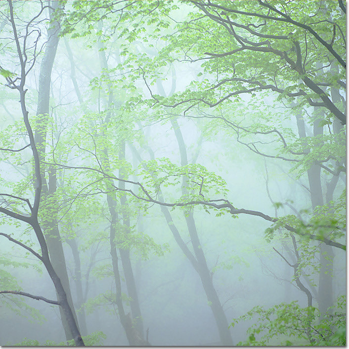 Photograph 그리움(Yearning) by Hyungkun Lee on 500px