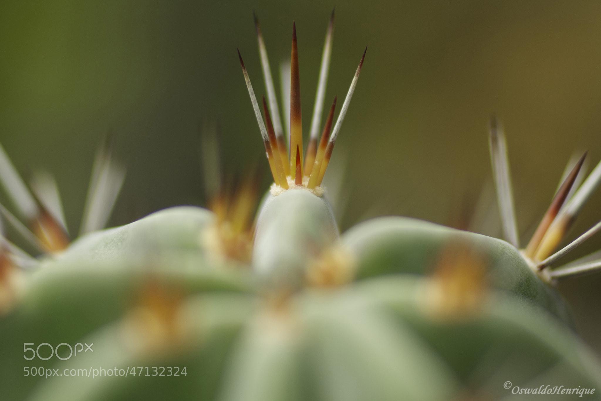 "Photograph Da série ""cactus"" - 26 by Oswaldo Henrique on 500px"