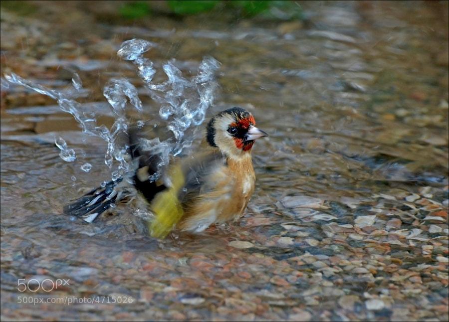 Photograph Splish Splash by John Robinson on 500px