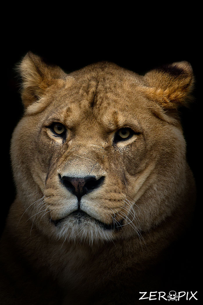 Photograph Queen of the Jungle by ZeroPix Photography on 500px