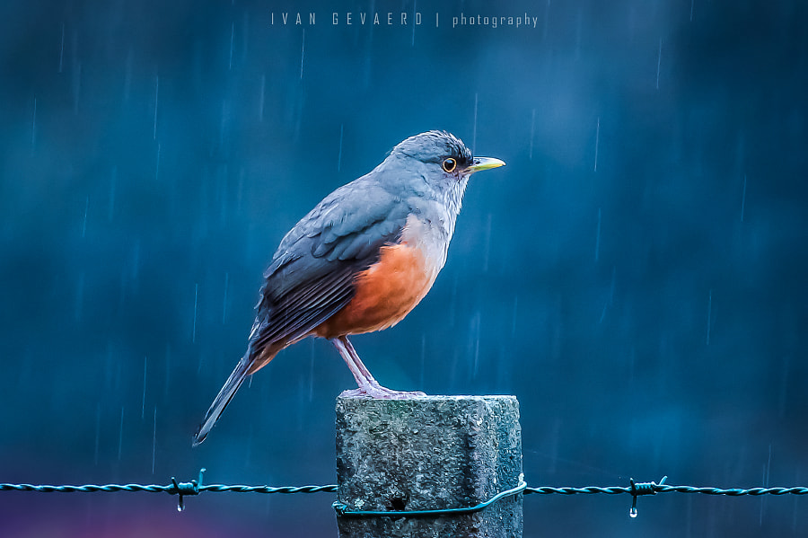 Photograph Last winter rain by Ivan Gevaerd on 500px