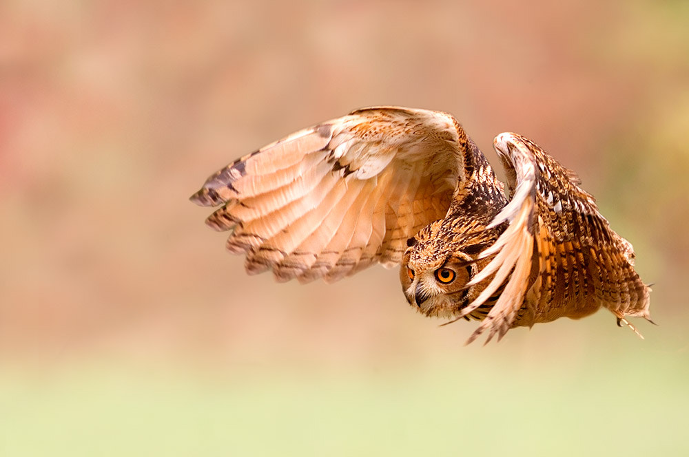 Photograph The flight by Stefano Ronchi on 500px