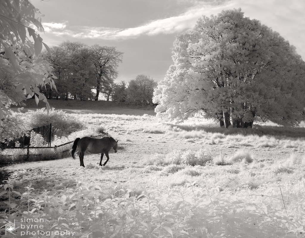 Photograph IR Horse, Minterne, Dorset by Simon Byrne on 500px