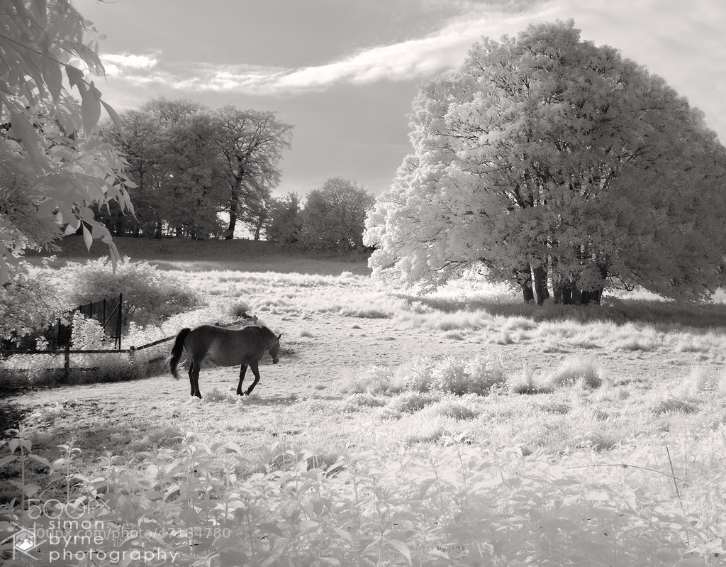 Photograph IR Horse, Minterne, Dorset by Simon Byrne on 500px