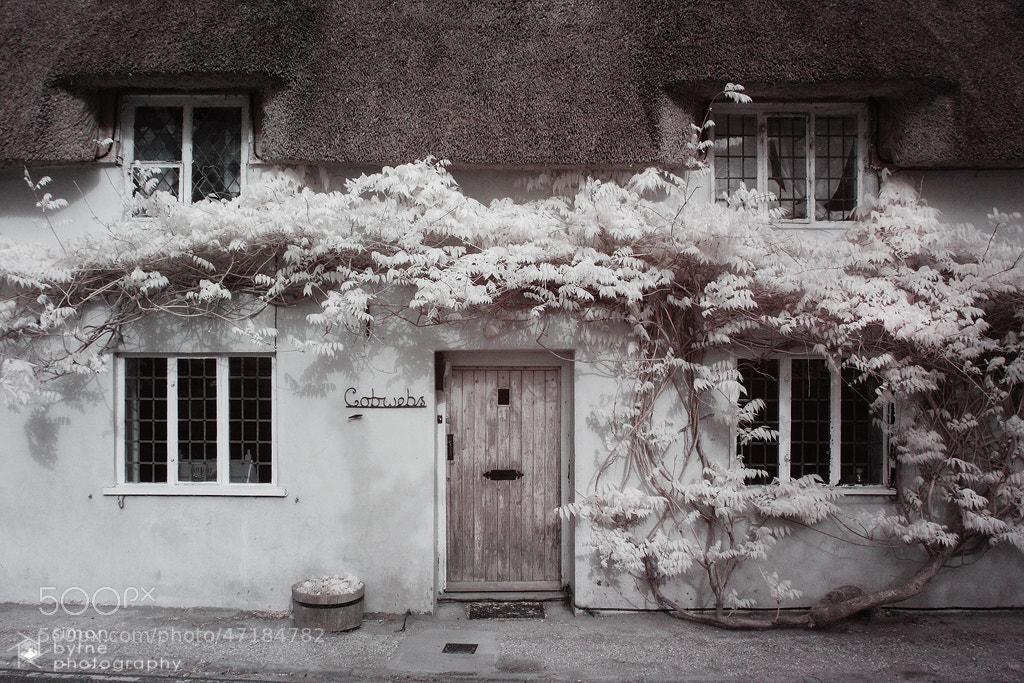 Photograph Cobwebs, Minterne, Dorset by Simon Byrne on 500px