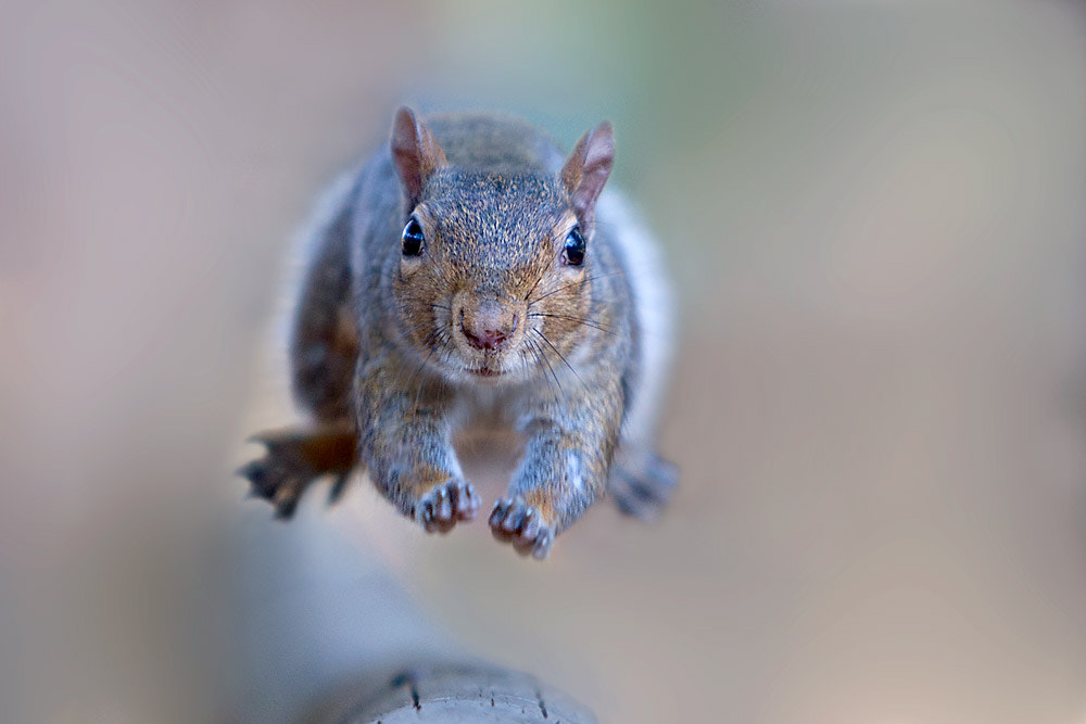 Photograph The jump by Stefano Ronchi on 500px