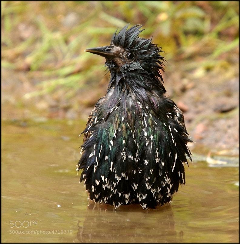 Photograph Soggy Bird by John Robinson on 500px