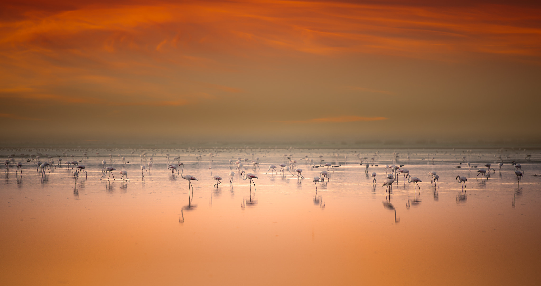 Photograph Flamingoes by Hani Latif Zaloum on 500px