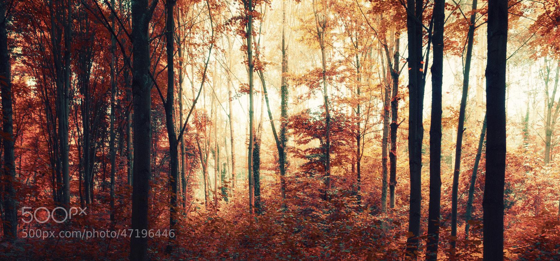 Photograph Untitled by Gusti Yogiswara on 500px