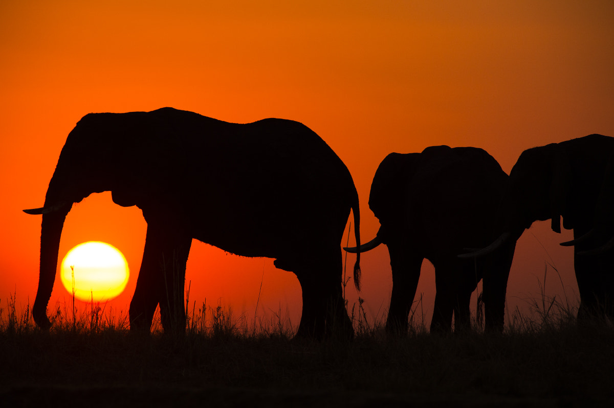Photograph Magic Chobe by Amazing Views Photography on 500px