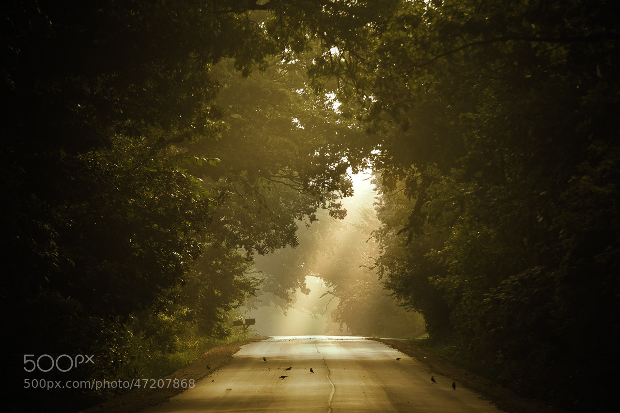Photograph Taking a Different Road by Loren Zemlicka on 500px