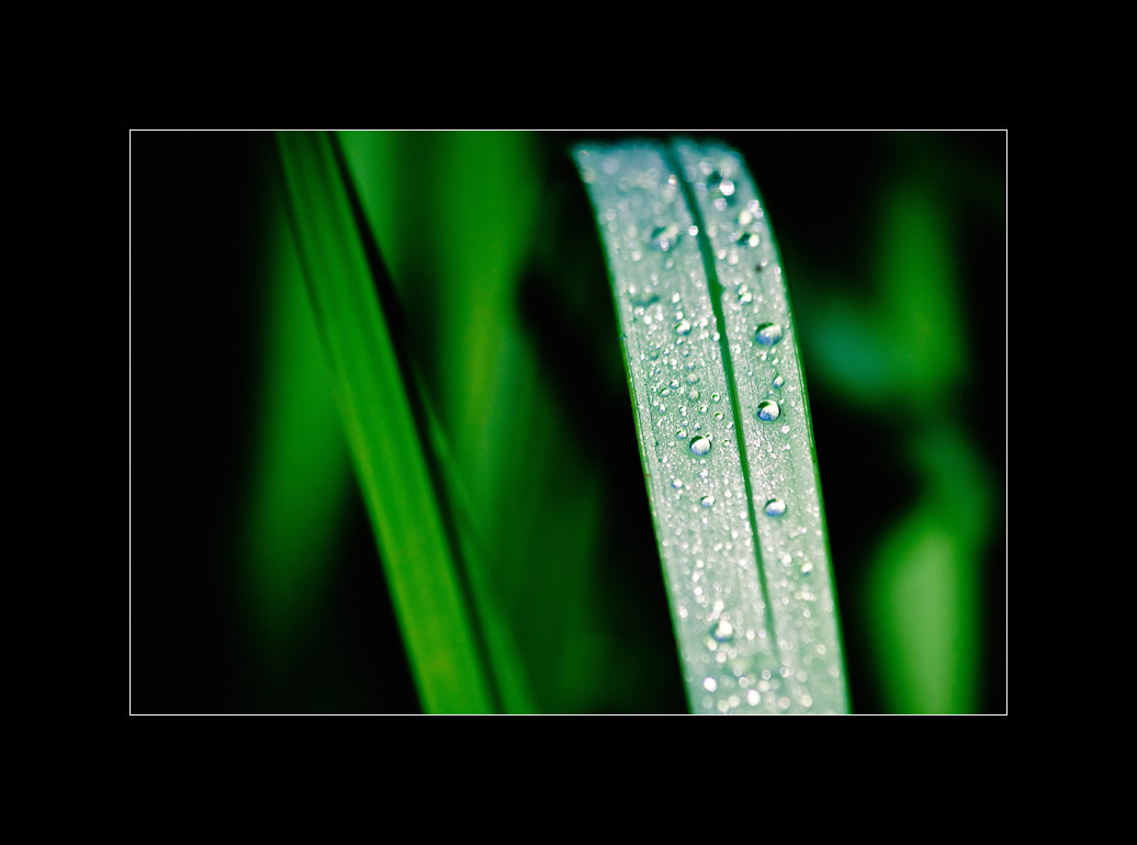 Photograph ....Morning Dew.... by Bubbers BB on 500px