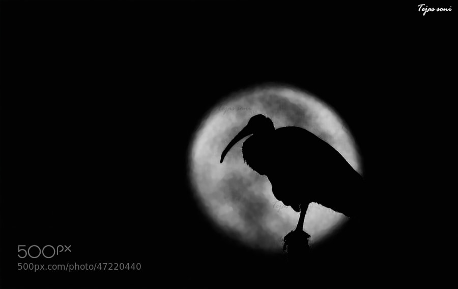 Photograph Moonwalker by Tejas Soni on 500px