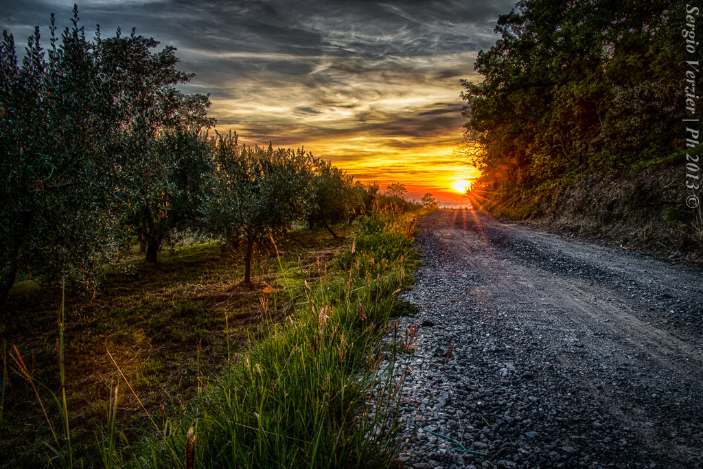 Photograph The way of the olive trees by Sergio Verzier Photography on 500px