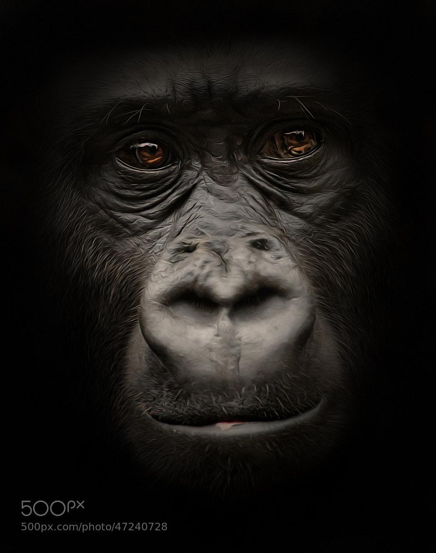 Photograph Portrait by Detlef Knapp on 500px