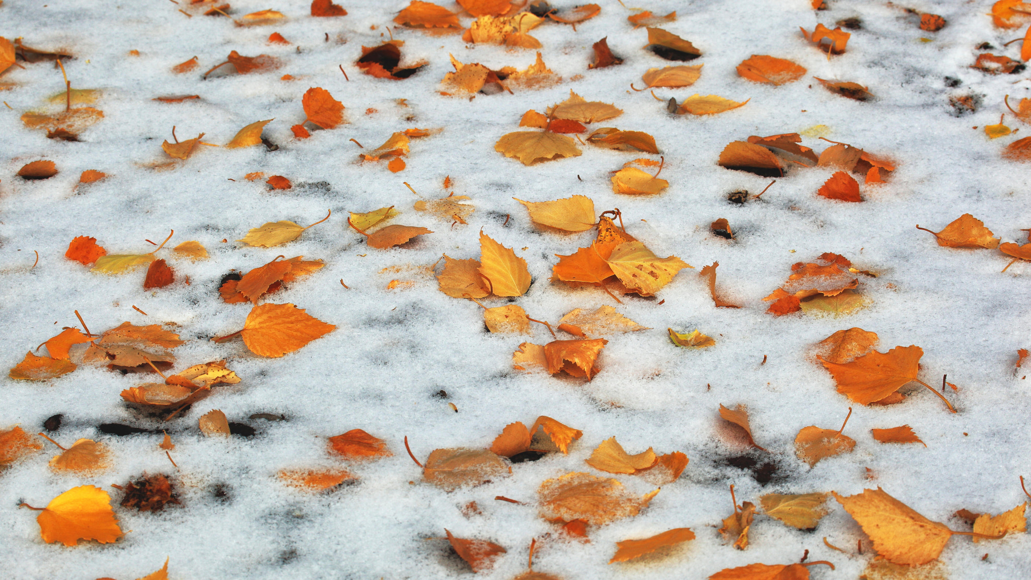 Photograph Autumn Snow by Ron Perkins on 500px