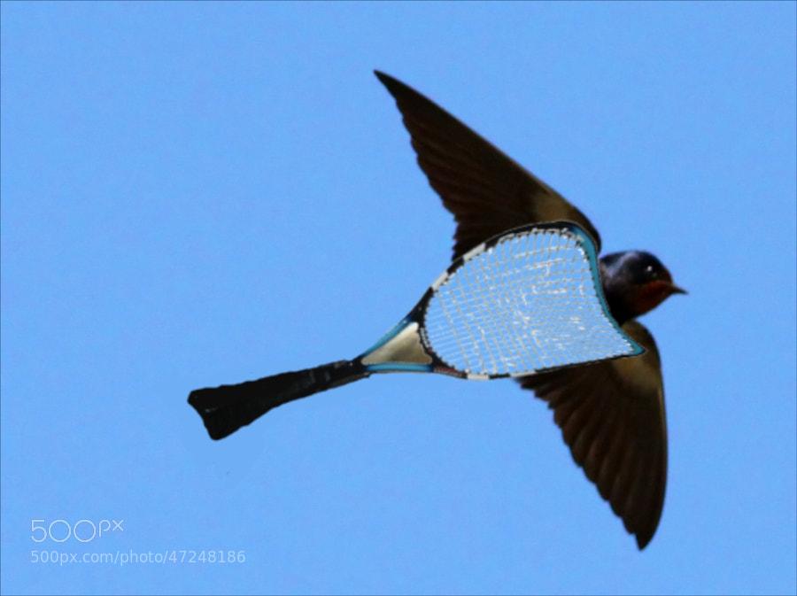 vispo by Pearl Pirie on 500px.com