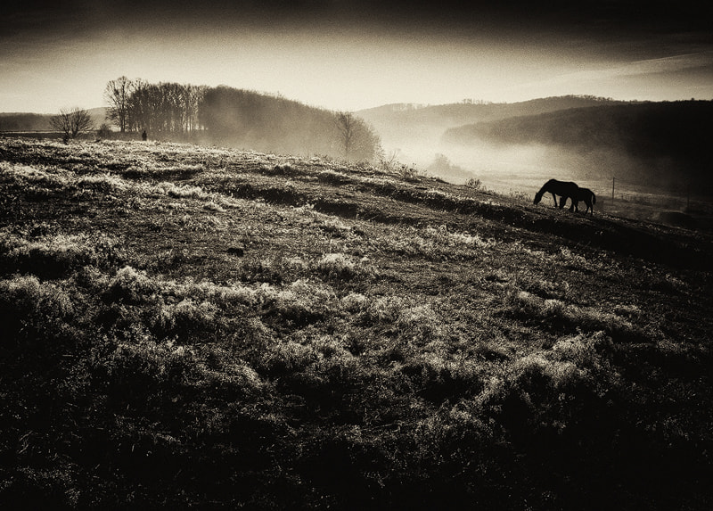 Photograph Chiaroscuro 5484. With Man And Two Horses by Andrei  Baciu on 500px