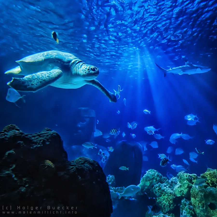 Photograph Sealife Hannover by Holger Bücker on 500px