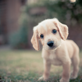 Puppy by Raymond Lin (raymondlin)) on 500px.com