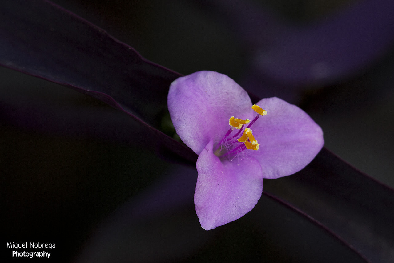 Photograph Purple reasons by Miguel Nóbrega on 500px