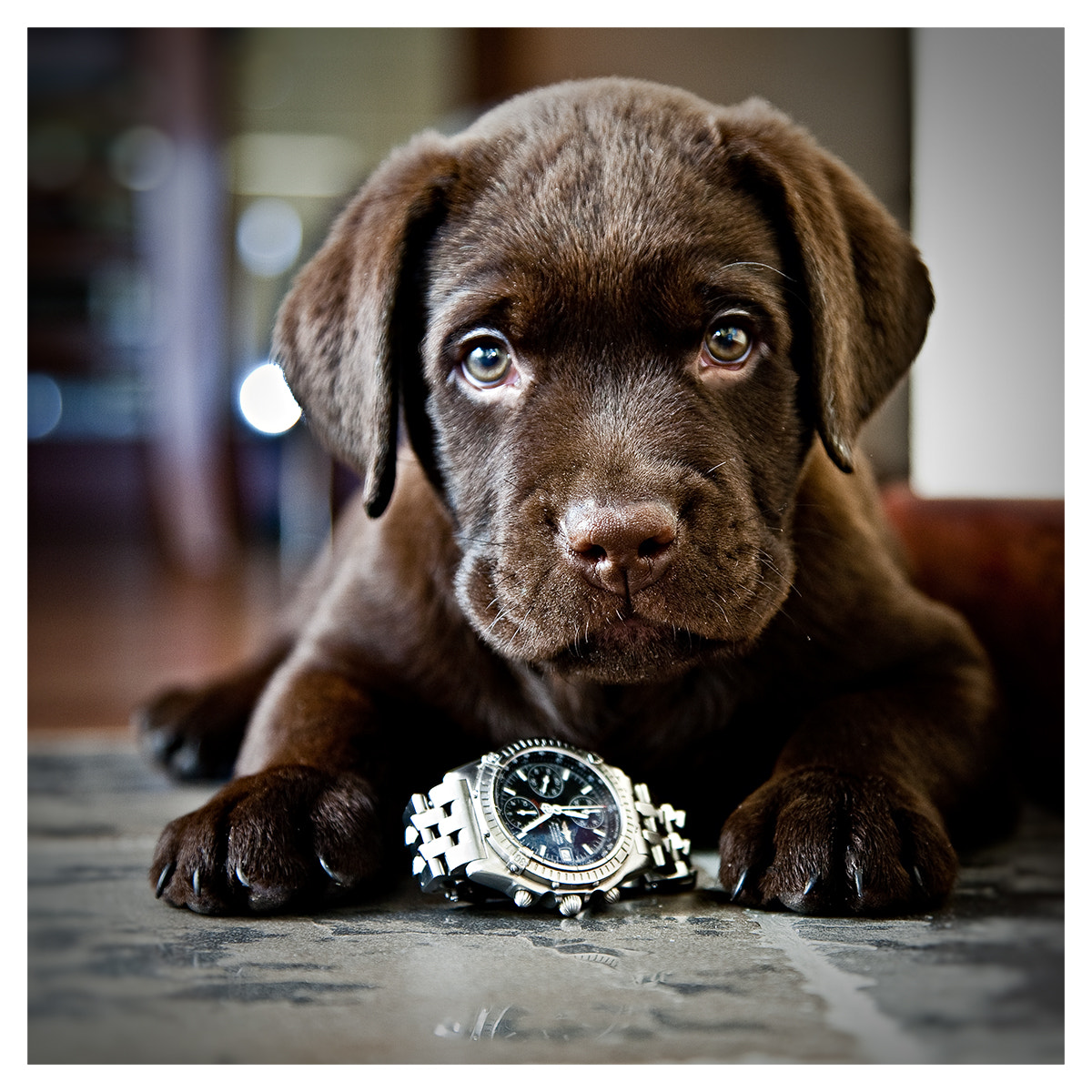 Photograph Puppy by Sergey Eronin on 500px