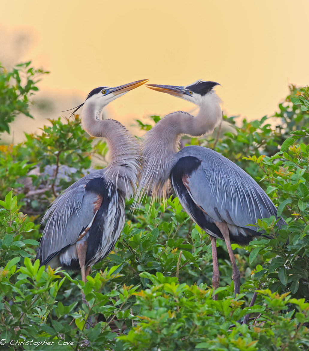 Photograph Morning Kiss by Christopher Cove on 500px