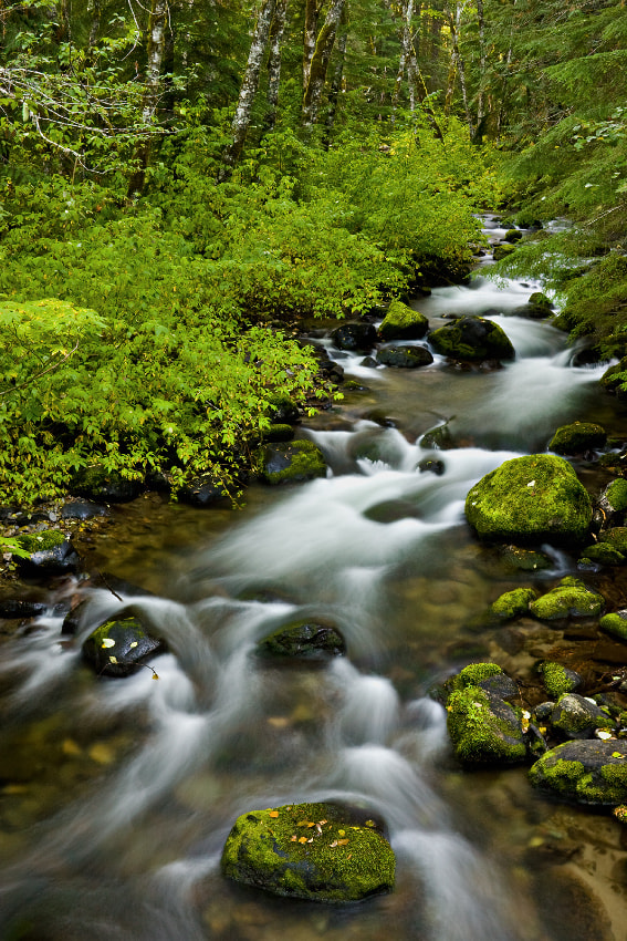 Photograph Still Creek by Ned Fenimore on 500px