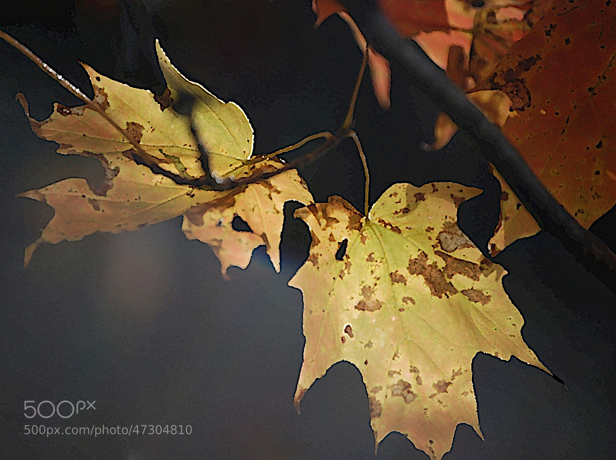 Photograph fall colors. . . . by Ed Brodzinsky on 500px