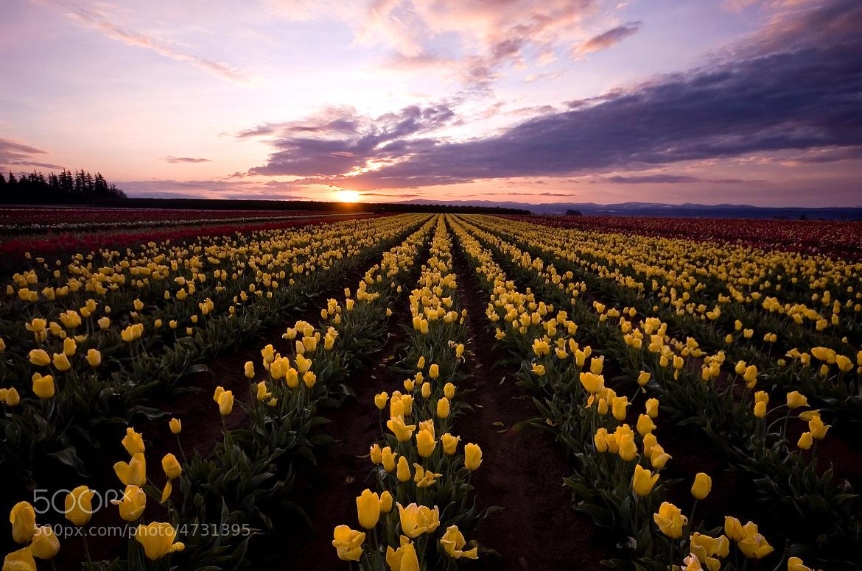 Photograph Wooden Shoe Tulip Festival by Dan Sherman on 500px