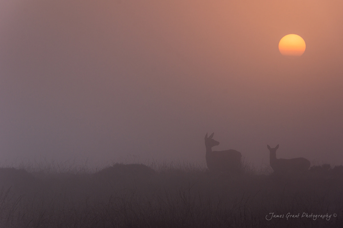 Photograph Deer Sunrise by James Grant on 500px